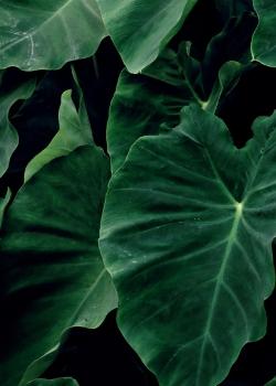 原生态绿色植物高清手机壁纸